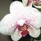Юлёк(Платья42-64р,Цветы в Стекле,Чудо-губка)
