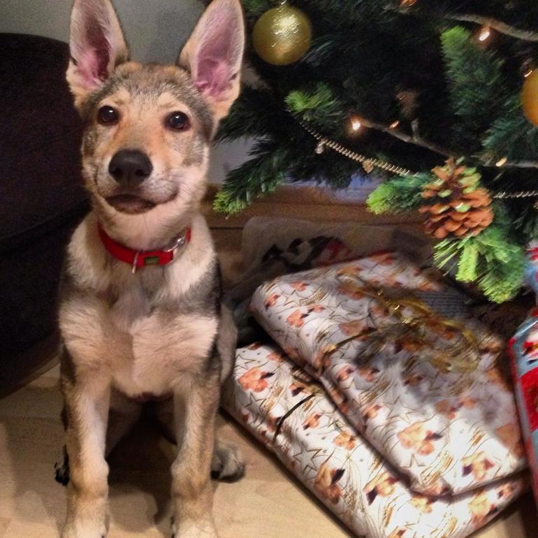 Лучший твой подарочек - это я :)