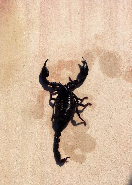 Скорпион:)) смайлики потому что дохлый