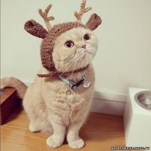 Шапка для кота новогодняя
