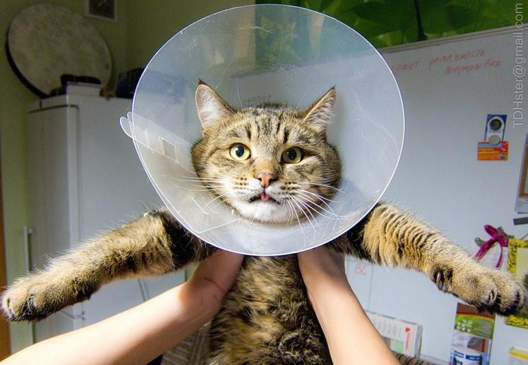 Послеоперационный ошейник для кошек