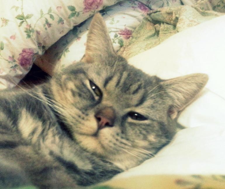 Котенок постоянно лижет попу