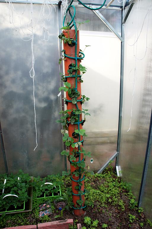 Вертикальная грядка для клубники из трубы своими руками 959