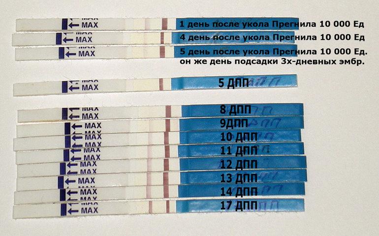 8 дпп трехдневочки - запись пользователя Ольга (id1852733) в сообществе ЭКО - мама в категории Ждём результаты ХГЧ - Babyblog.ru