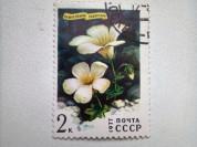 Марка 2к 1977 год СССР Камнеломка Сибирская