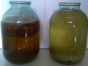 Индийский морской рис и чайный гриб
