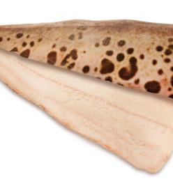 Филе зубатки НА коже шт. заморозки 5кг