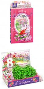 Подарочный набор Живая открытка 8 марта Тюльпаны