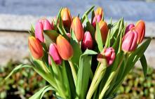 Букет Тюльпаны, 19 шт.
