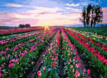 Картина по номерам GX 8819 Поле тюльпанов 40*50