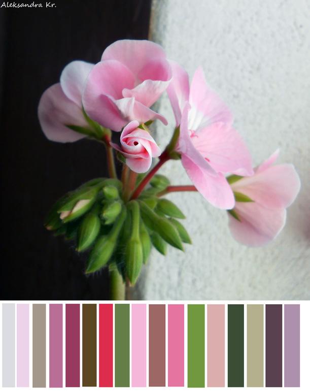 Жизнь в цвете.Розовый.