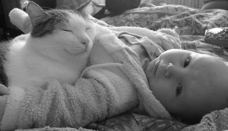 Совместимы ли грудничок и кот?