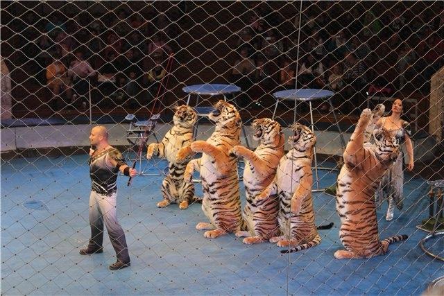 Вчера ходили в цирк