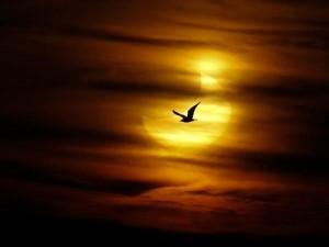 Солнечное затмение 3 ноября 2013. Астрологический прогноз.