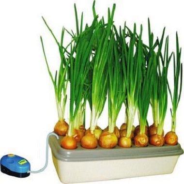 Девочки, выращивающие растения гидропонным методом, подскажите!