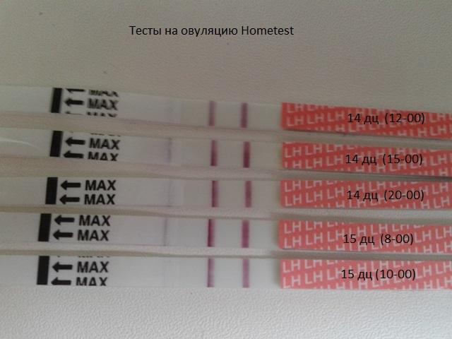 Тест на овуляцию что покажет у беременной 88
