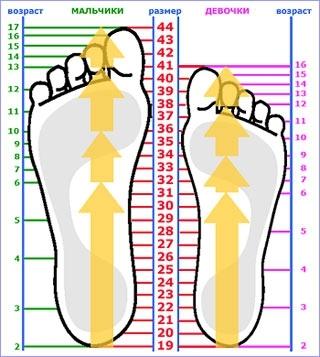 Соотношение длинны стопы, возраста и размера обуви.