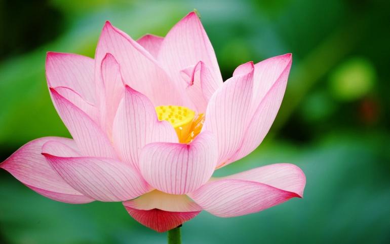 Семь внутренних законов для обретения гармонии