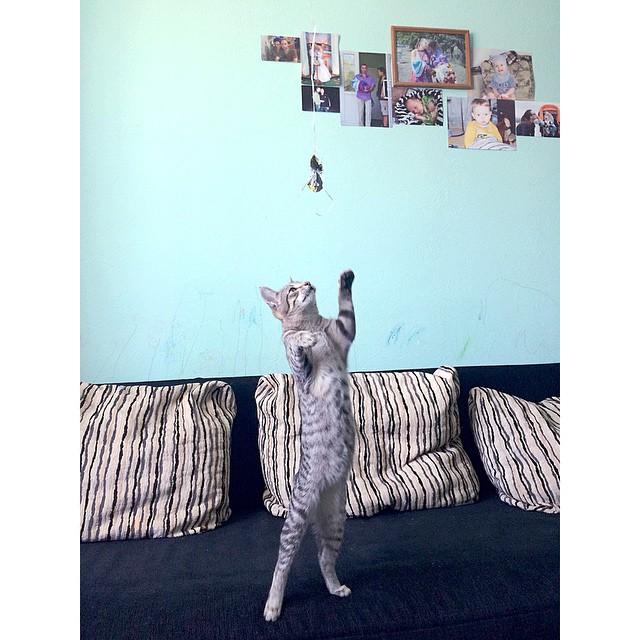 Как занять кота на весь день