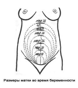 Фото ребенка 36 неделя беременности