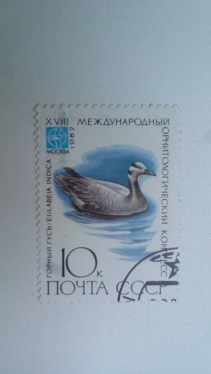 Марка 10к 1982 год СССР Горный Гусь