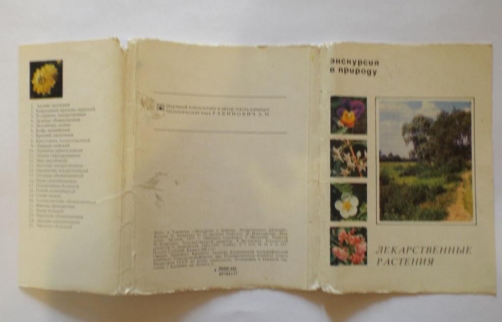 Экскурсия в природу. Лекарственные растения.
