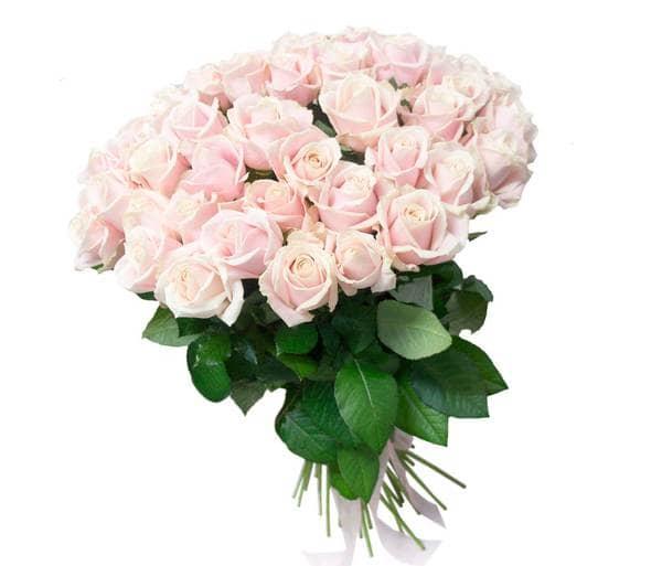 Розы в подарок приму