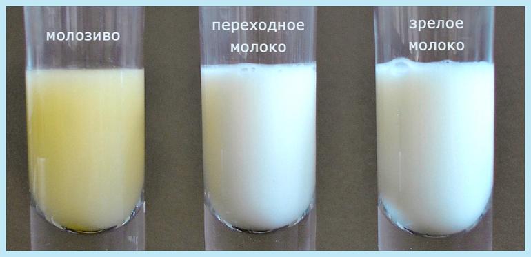 Если молоко сворачивается в желудке