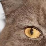 orange-kitty