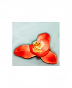 Орхидея на зажиме (коралловый)