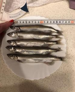Мойва нр 18,5 кг