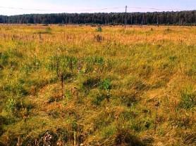 Участок 10 соток 40 км от МКАД (Раменский р-н)