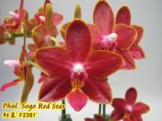 Phal. Sogo Red Star *aroma*(MC)