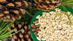 Кедровый орех очищенный 500гр