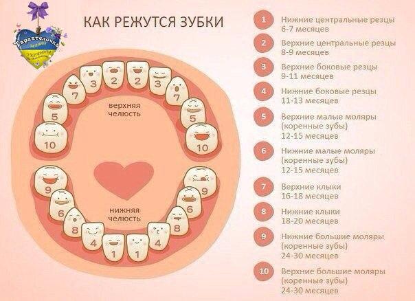 Что такое моляры? Зуб 25