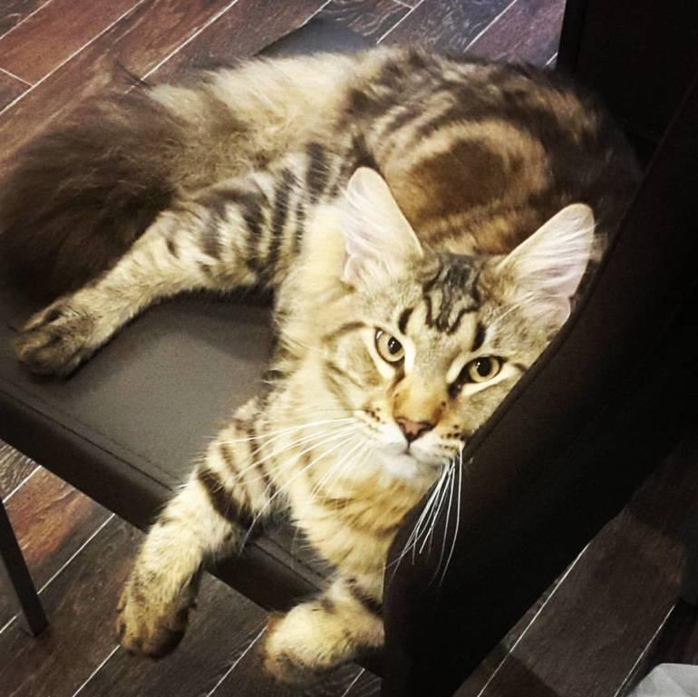 Пропал кот как пережить