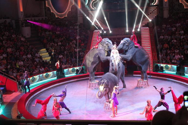 горящем цирк на красносельской фото главное